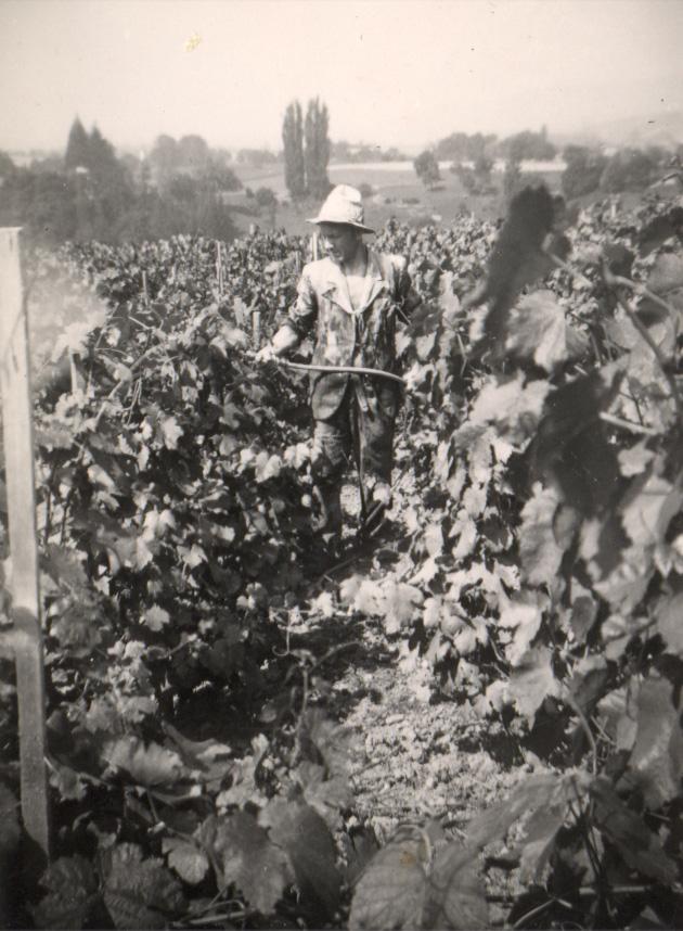 Traitement de la vigne notre histoire - Traitement de la vigne ...