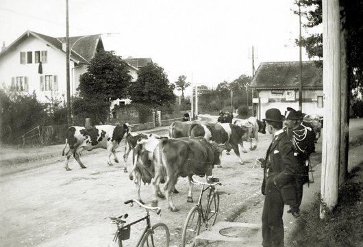 Le troupeau, Gd-Saconnex