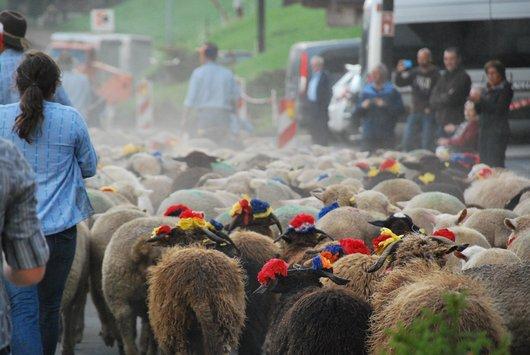 Foire aux moutons
