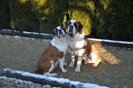 Un joli couple... Mous & Faccia d'Amore