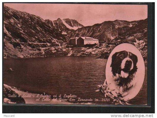 Photomontage avec chien Saint Bernard