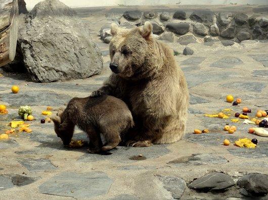 L'ourson du Zoo de Servion