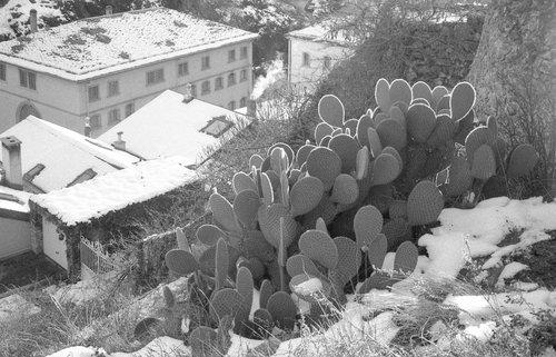 Le cactus de tourbillon