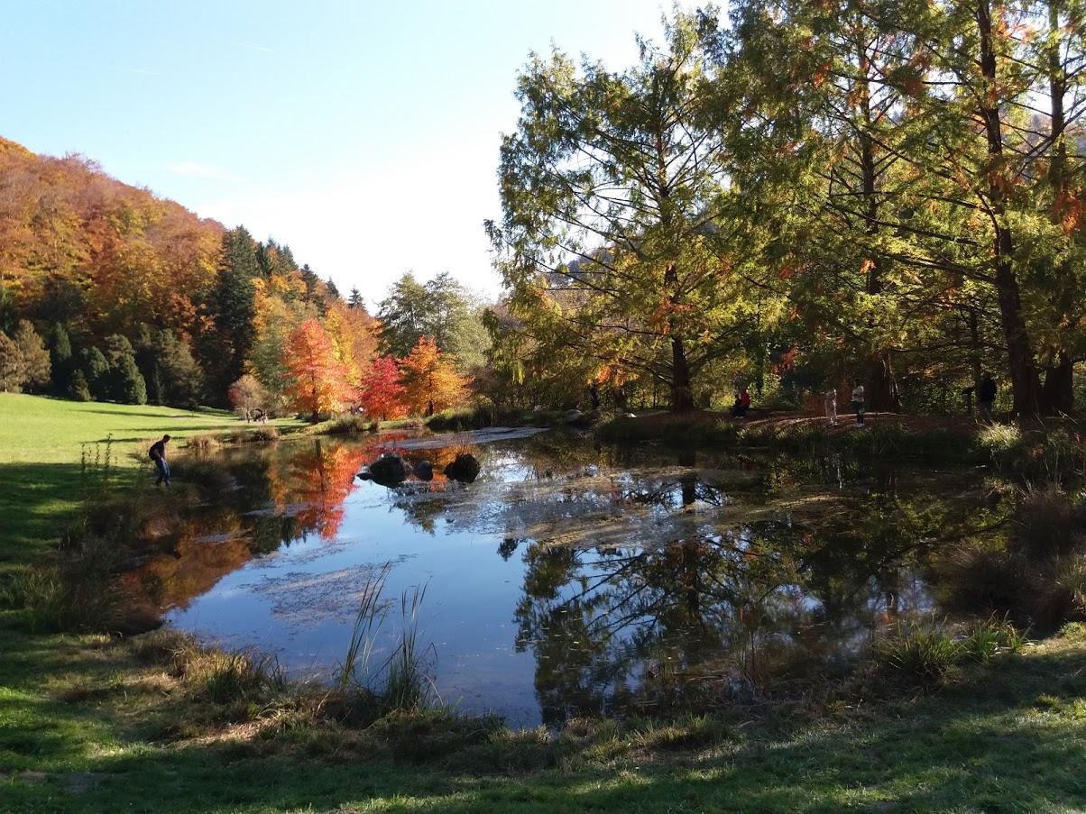 Aubonne - Etang à l'Arboretum
