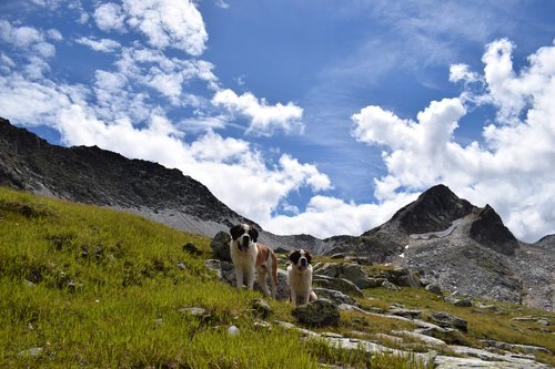 Les St-Bernards en randonnée